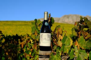 What does 2020 hold for wine lovers?