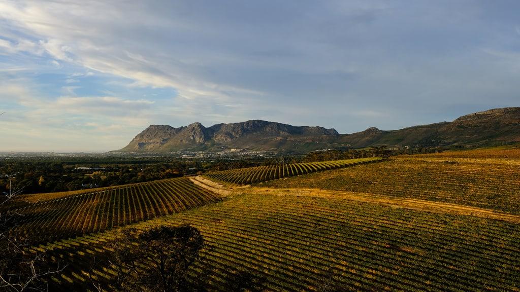 Groot Constantia Winelands False Bay