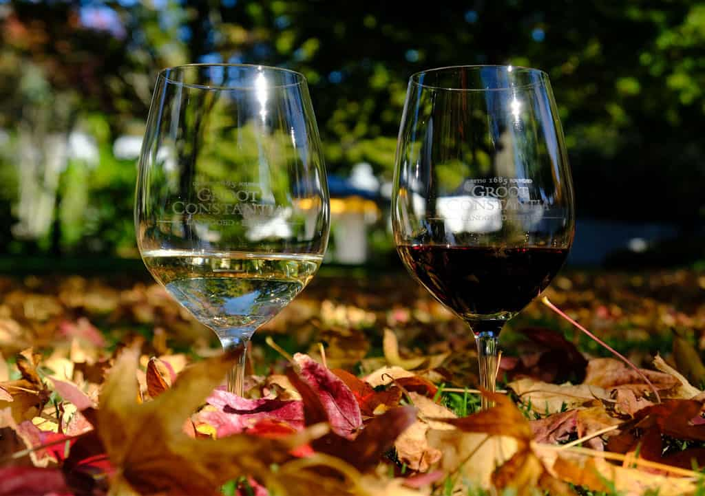 two glasses wine between leaves